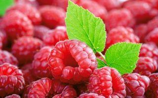 Можно ли кушать малину при грудном вскармливании: свежие ягоды и малиновое варенье в рационе кормящей мамы