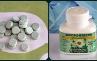 «хлорофиллипт»: инструкция по применению раствора для лечения горла и носа у детей