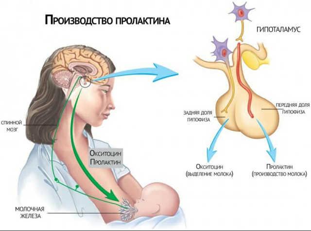 Месячные при грудном и искусственном вскармливании: когда начинается менструация после родов и кесарева сечения?