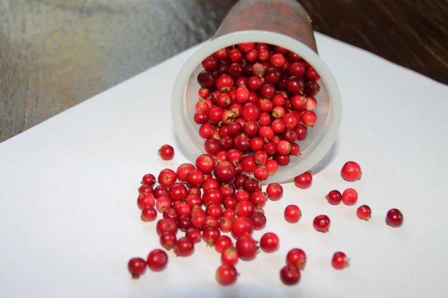 Можно ли кушать бруснику при грудном вскармливании: ягоды и морс в рационе кормящей мамы