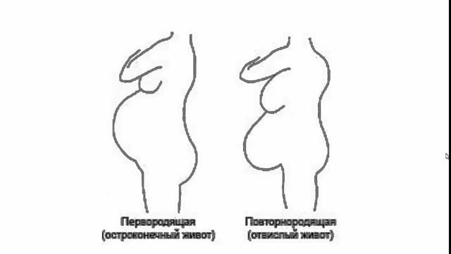 Когда у беременных начинает расти живот: на каком сроке, как увеличивается животик при беременности по неделям?