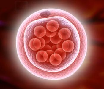 Норма и динамика изменения уровня хгч после процедуры эко и переноса эмбрионов в таблице по дням и неделям