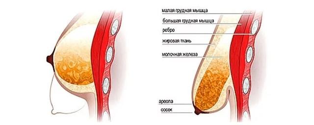 Как после родов восстановить грудь, поднять и сделать ее упругой, увеличить или уменьшить?