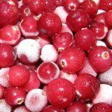 Можно ли кормящей маме свежую клюкву и морс: сроки введения ягоды в рацион при грудном вскармливании