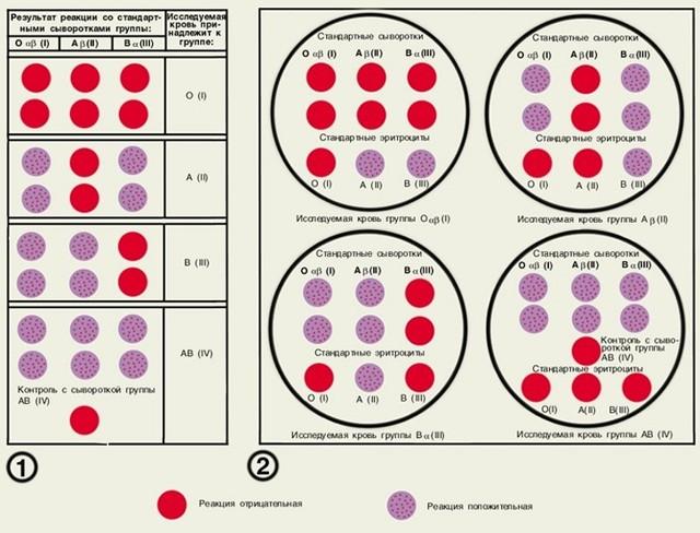 Откуда берут кровь для анализа на определение группы и резус-фактора, как сдавать биоматериал, сколько это стоит?