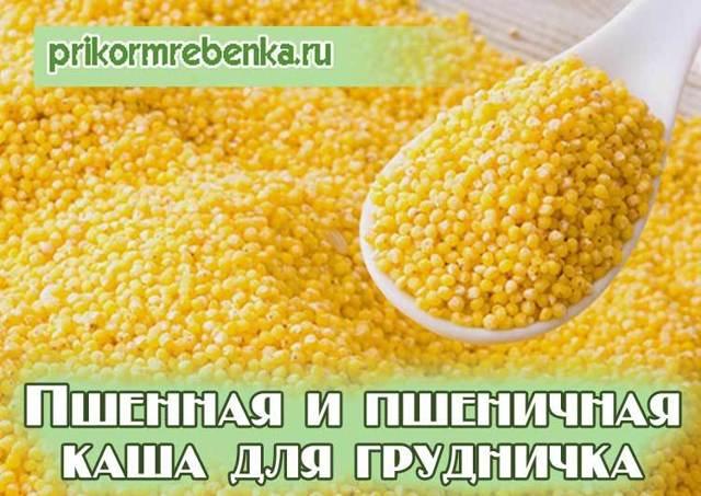 Когда можно давать ребенку пшенную и пшеничную кашу: рецепты для прикорма грудничка до 1 года