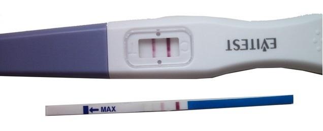 Положительный тест при беременности: как выглядит на ранних сроках, каковы причины ложноположительного результата?