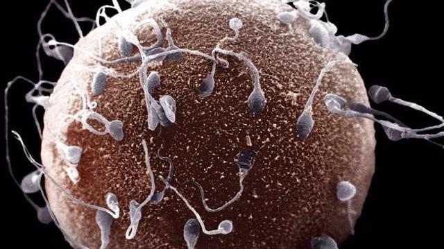 Можно ли забеременеть не в дни овуляторной фазы: какова вероятность зачатия не во время овуляции?