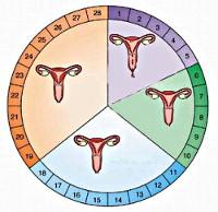 Причины задержки месячных на 2-3 дня: непатологические факторы и поводы для обращения к врачу