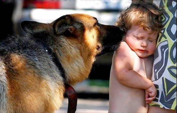 Что делать, если ребенка укусила домашняя или дворовая собака: куда обращаться, какие нужны прививки?