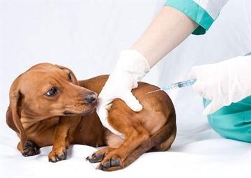Нужно ли детям делать прививки: мнения специалистов со всеми