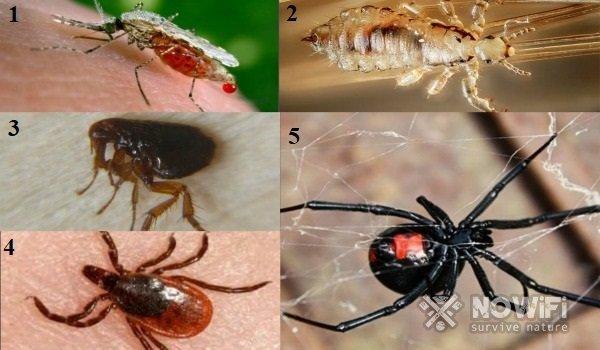 Что делать при укусе насекомых у детей: какими мазями лечить отек и покраснение кожи, чем снять зуд?