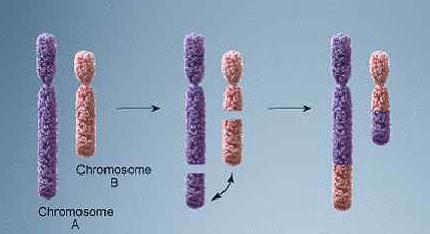 Анализ крови на кариотип семейной пары: что это такое, для чего проводится кариотипирование и как проходит подготовка?
