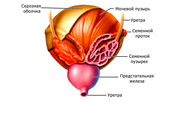 Агрегация и агглютинация сперматозоидов в спермограмме: что это такое и чем чревато?