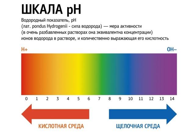 Спермограмма: виды анализа, норма и расшифровка результатов, возможные диагнозы и калькулятор