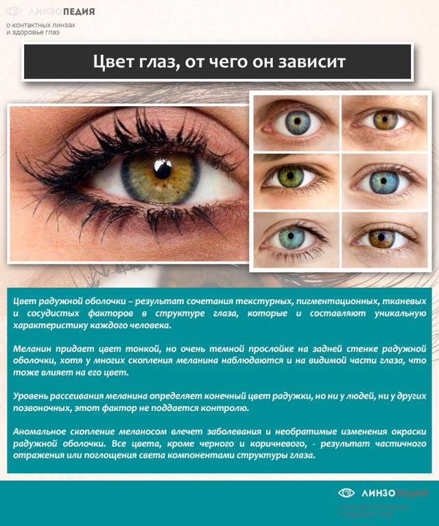 Какой цвет глаз будет у новорожденного ребенка, если у родителей они карие, голубые или зеленые?
