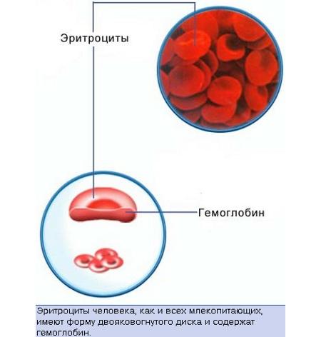 Что означает повышение или понижение уровня эритроцитов в крови у ребенка, и каковы нормы по возрасту?