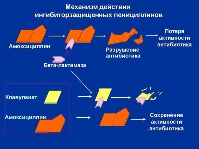 Амоксициллин и беременность: полная инструкция по применению для беременных в 1, 2, 3 триместрах