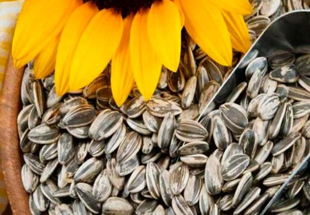 Можно ли кормящей маме кушать семечки: польза и вред продукта при грудном вскармливании новорожденного