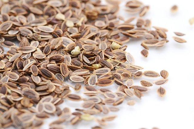 Семена укропа для улучшения лактации: как кормящей маме пить укропную водичку при грудном вскармливании?