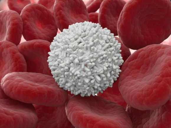 В кале у грудничка повышены лейкоциты: в чем причина патологии и какова норма для детей?