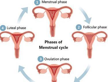 Какова вероятность забеременеть в конце цикла, возможно ли зачатие в последний день менструации?