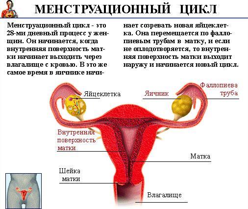 Все о процессе менструации: что это такое, почему у девушек и женщин идут месячные и для чего они нужны?