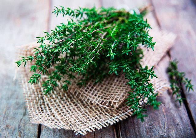 Можно ли кормящей маме чай с чабрецом: особенности употребления тимьяна при грудном вскармливании