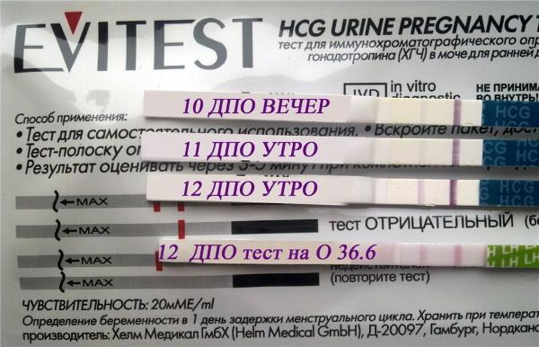 Как правильно пользоваться тестом на беременность
