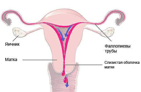 Первые признаки и предвестники месячных у девочек: как понять, что начинается менструация, сколько длится?